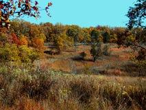 Fallwiese mit bunten Bäumen Stockbild