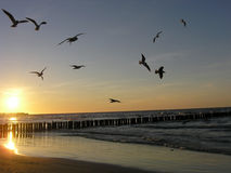 falochronów seagulls Fotografia Royalty Free