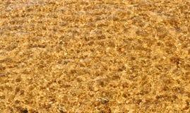 Falowa morze plaża na odgórnym widoku zdjęcie stock