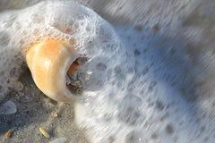 falowy Shell Zdjęcie Stock