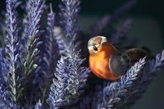 Falsas flores de la lavanda y falso pequeño pájaro Imágenes de archivo libres de regalías