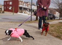 Falsche Hunde auf Leinen Stockfoto