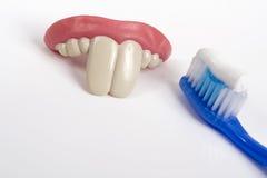 Falsche Zähne und Zahnbürste Stockbild