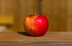 Falscher Apfel Lizenzfreie Stockbilder