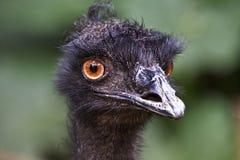 Falscher Haar-Tag des Emus Stockfoto