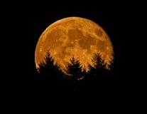 Falscher Mond auf dem Anstieg Stockbilder