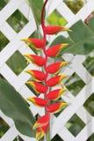 Falscher Paradiesvogel auf einem weißen Zaun. Stockfotos