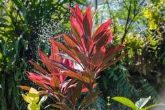 Falscher Paradiesvogel Blume stockbilder