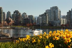 False Creek Daffodil View, Vancouver Stock Photography