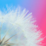 False dandelion seeds with water drops Royalty Free Stock Images