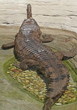 False Gharial Royalty Free Stock Photography
