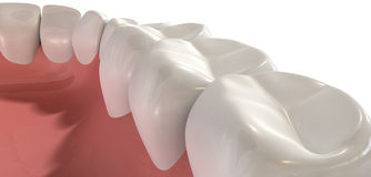 False Human Teeth Extreme Closeup Stock Image