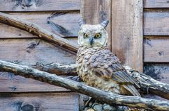 This owl is waiting for you :- Stock Photography