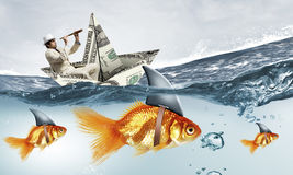 False risk for your business. Concept of fake threat when businessman float in dollar ship and sharks in water appear to be goldfish Royalty Free Stock Image