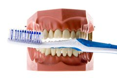 False teeth holding toothbrush Stock Photo