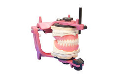 False teeth prosthesis Royalty Free Stock Photography