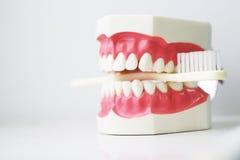 False Teeth Prosthetic Biting Toothbrush on White Stock Images