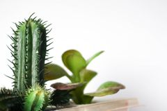 Falsificazione del cactus Fotografia Stock