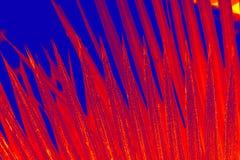 Falsk färg, dramatiskt rött och blått abstrakt blad Royaltyfri Foto