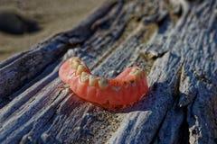 Falska tänder på stranden arkivfoton