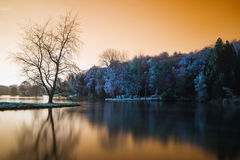 Falskt färgsjölandskap med lugna relfection Royaltyfri Foto