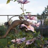 Falso lagarto que se sienta en el arco con las flores Imagenes de archivo