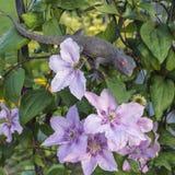 Falso lagarto que se sienta en el arco con las flores Imagen de archivo