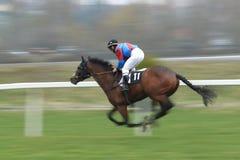 Falstaff de Berce - лошадиные скачки Стоковая Фотография