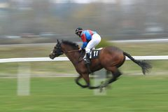 Falstaff de Berce - horse racing Stock Photography