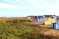 Falsterbo沙丘的费尔斯在Hovbacken,瑞典附近的 免版税库存照片