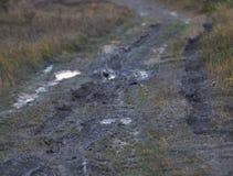 Falta das estradas na floresta Imagens de Stock Royalty Free