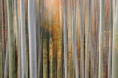 Falta de definición abstracta del bosque Fotografía de archivo