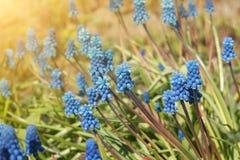 Falta de definición azul de la flor Fotos de archivo