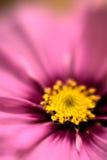 Falta de definición de la floración Foto de archivo libre de regalías