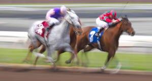 Falta de definición de movimiento de caballos que compiten con Imágenes de archivo libres de regalías