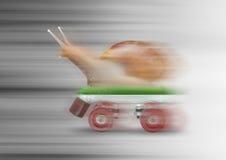 Falta de definición de movimiento patinadora del caracol Imágenes de archivo libres de regalías