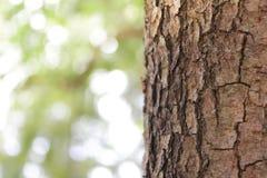 Falta de definición del árbol superficial y del fondo natural de árboles imágenes de archivo libres de regalías