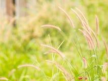 Falta de definición del fondo de la hierba del campo Fotografía de archivo