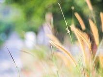 Falta de definición del fondo de la hierba del campo Imagen de archivo libre de regalías