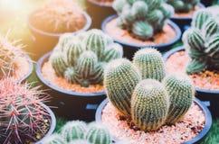 Falta de definición del fondo del cactus en granja Fotografía de archivo libre de regalías