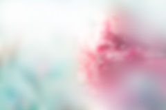 Falta de definición en colores pastel de la flor abstracta para el concepto del fondo, de la suavidad y de la falta de definición Fotos de archivo