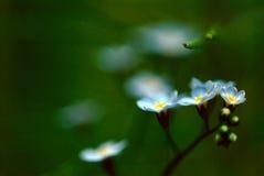 Falta de definición floral azul Imágenes de archivo libres de regalías