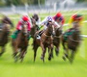 Falta de definición de movimiento galopante del caballo de raza Foto de archivo libre de regalías