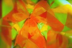 Falta de definición vegetativa del fondo La naranja brillante del melocotón empañó perspectiva en un espejo triangular Imágenes de archivo libres de regalías