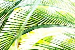 Falta de definición de movimiento de la hoja de la palmera Imagen de archivo libre de regalías