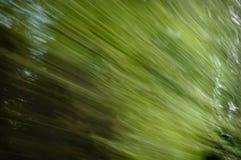 Falta de definición de movimiento del árbol del fondo natural Imágenes de archivo libres de regalías