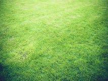 Faltas de definición de la textura de la hierba verde con la luz de oro en la puesta del sol para el fondo Foto de archivo libre de regalías