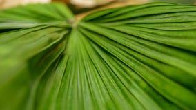 Falten auf Palmblatt lizenzfreies stockfoto