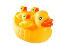 A família amarela de borracha do pato - sira de mãe ao pato e a pouco isolado ducky Imagem de Stock