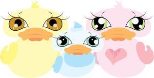 Família bonito do pato Fotografia de Stock